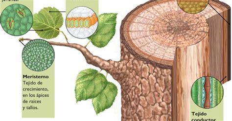 tejidos animales y vegetales tejidos animales y tejidos vegetales tejidos vegetales