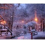 Ice Nature Winter Snow Trees Night Lights Cold Purple