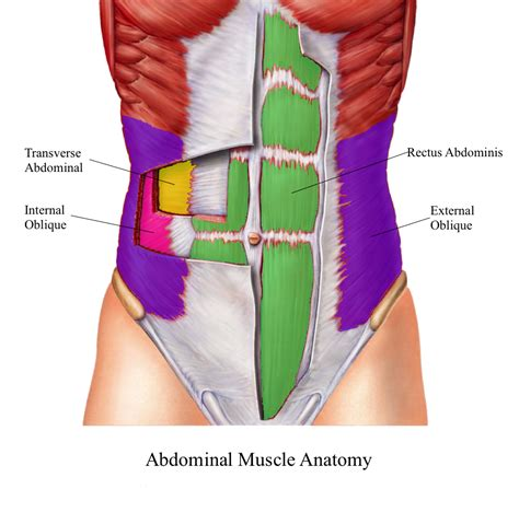 abdominal muscles diagram what are the best abdominal exercises