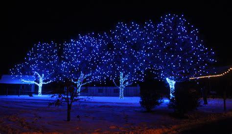 blue tree lights indigo blue tree lights at the dye garden rocky