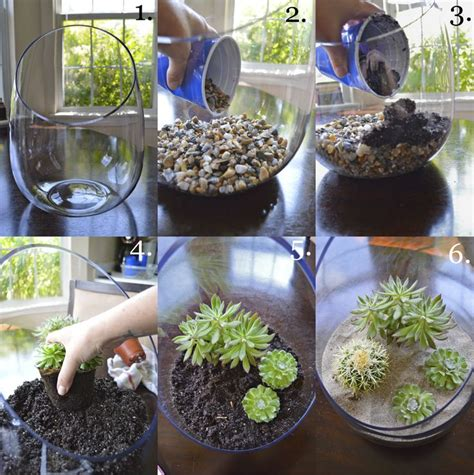 diy indoor garden cactus terrarium how to by 937 best terrariums and cloches images on pinterest