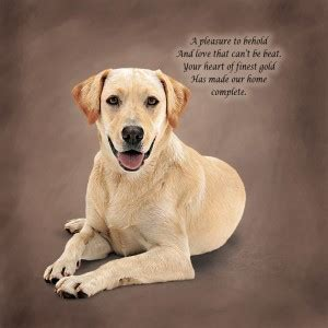 golden retrievals poem quotes about labrador retrievers quotesgram
