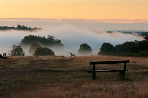 richmond park 21 wildlife photos you can barely believe are in