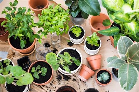 coltivare ortaggi in vaso coltivare orto sul balcone orto in balcone realizzare