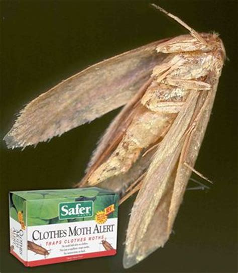 Moth In Closet by Safer Brand 07270 Clothes Moth Alert Trap
