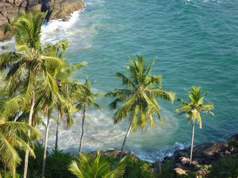 beautiful hawaiian shrub plants trinity by the sea file beautiful sea coconut trees jpg wikimedia commons