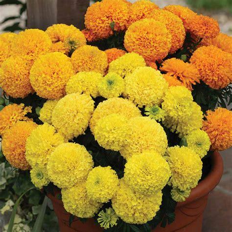 Summer Flowers In India Garden Flowers In India