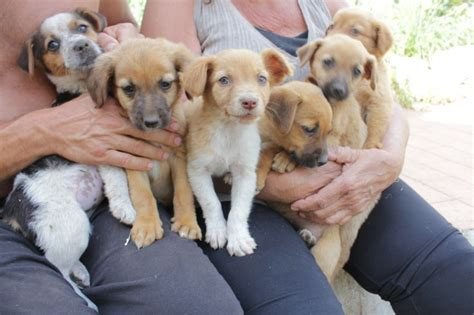 cuccioli cercano casa cuccioli taglia piccola cercano casa petpassion