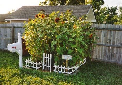 Sunflower Garden Ideas Top Tips Uk Children S Garden Shade Ideas