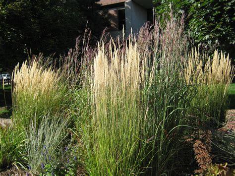 native grasses of nebraska