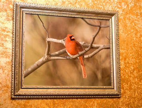 framing photos without glass secrets of digital bird photography