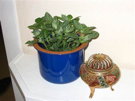small indoor plants my new indoor plants a transplanted gardener