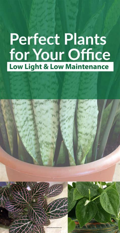 10 low light low maintenance plants for office desk plants perfect for your office low light and low maintenance
