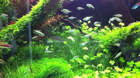 Aqua Garden by Aquagardenmathewwilliamsjpg Free Aqua Garden Aqua