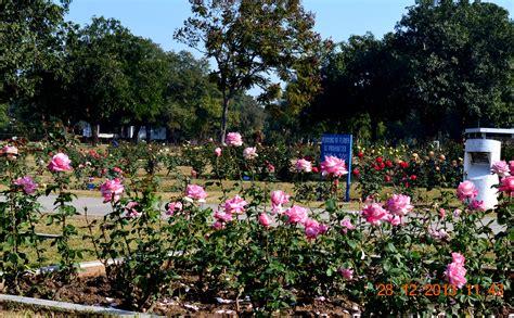 Making Flowers by Rose Garden Chandigarh Sunil Agrawal