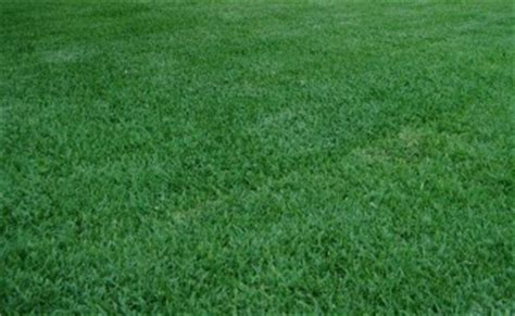 windsor green couch roll out lawn adelaide 4 types of instant turfs to choose