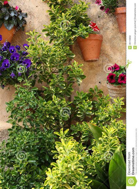piante da giardino in vaso piante in vaso e fiori in un giardino fotografia stock