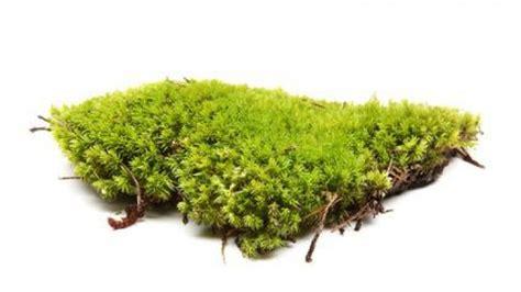 Moos Im Rasen Was Tun 4355 moos entfernen was tun gegen moos frag mutti