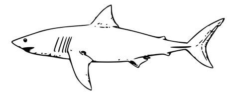 how to draw a doodle shark desenhos de tubar 227 o para colorir e imprimir toda atual
