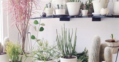 7 different way to indoor plants decoration ideas in 7 different way to indoor plants decoration ideas in