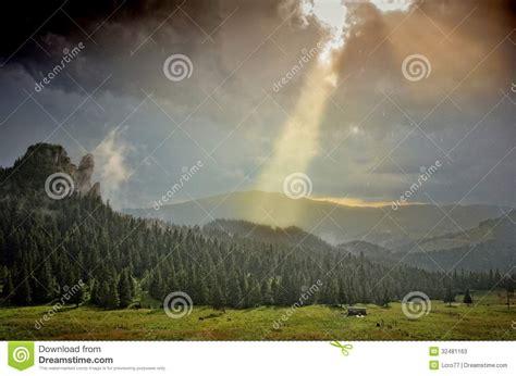 Sun Shower by Sun Shower Mountain Fir Forest Stock Photos Image