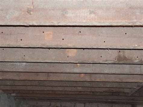 traitement termites jardin les termites mission renovation
