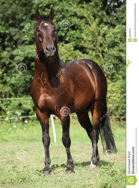 nice hourse nice horse standing in front of nature background stock