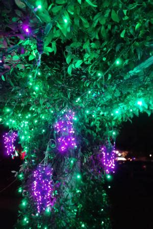 lights wilmington nc airlie lights picture of airlie gardens wilmington