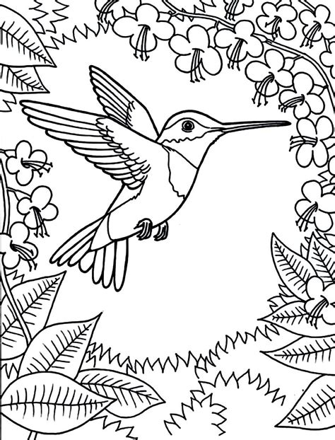 Coloring Page Hummingbird by Printable Hummingbird Coloring Pages Coloring Animal