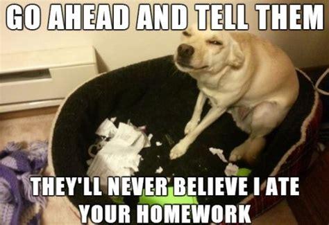 Doggy Meme - dog meme 2014 memes