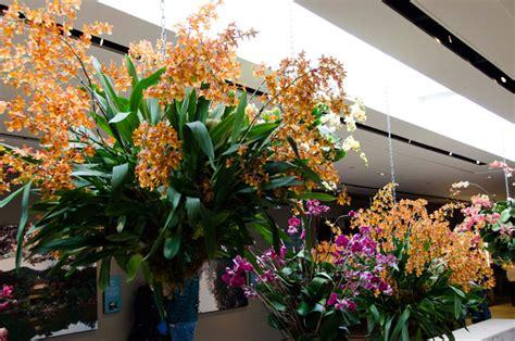 Chicago Botanic Garden Orchid Show Orchid Show Botanical Gardens Garden Ftempo