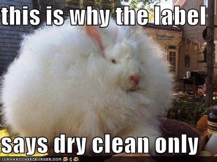 Funny Rabbit Memes - rabbit ramblings funny bunny memes