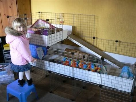 Guinea Pig Cage Shelf And R by 17 Best Images About Guinea Pigs Food Care