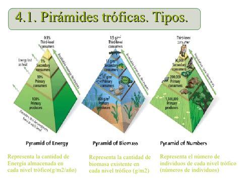 cadenas alimentarias piramides ecologicas ecosistemas