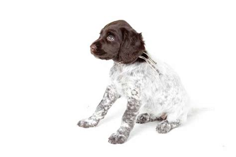 best small dogs to own 35 best medium and small dogs for top tips