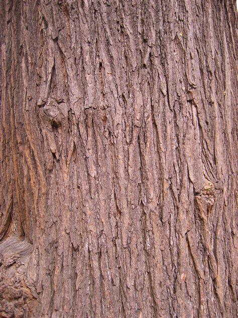 design elements texture definition file texture arbre jpg wikimedia commons