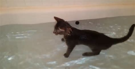 this cat is enjoying swimming in the bathtub petsfans