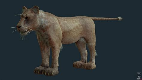 film lioness lioness for games and film 3d model game ready obj