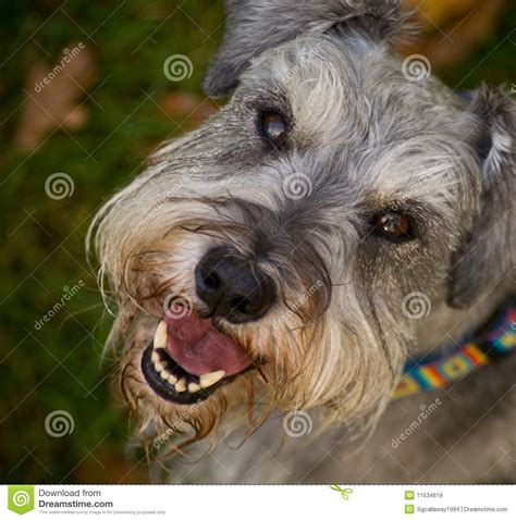 imagenes de animales felices smiling happy dog close up royalty free stock images