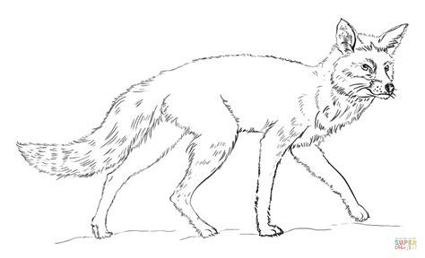 realistic red fox coloring page free printable coloring