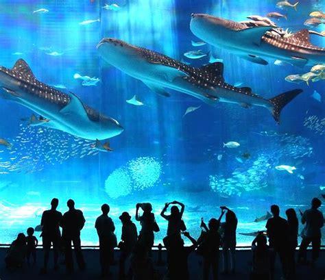 japanese aquarium okinawa churaumi aquarium japan get tanked pinterest