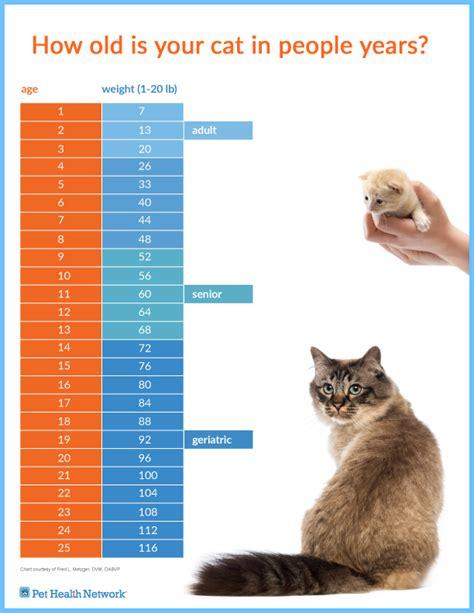 senior cat healthy paws  effect