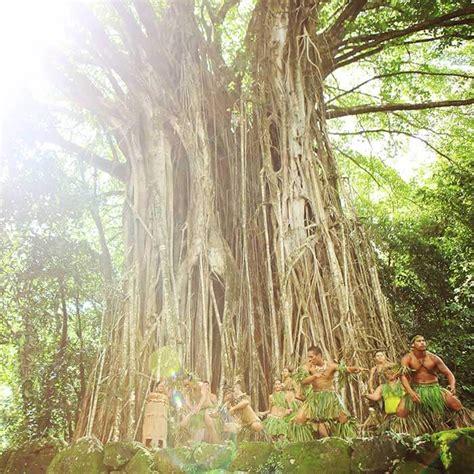 Cucina Cana Tradizionale Ulteriori Informazioni Sulla Cultura Di Le Isole Di Tahiti