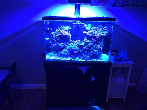visio aquariums 50g visio center overflow other equips reef central