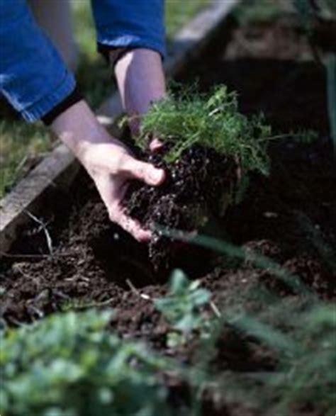 vegetable garden fertilizer recommendations how to fertilize vegetable garden soil how to fertilize