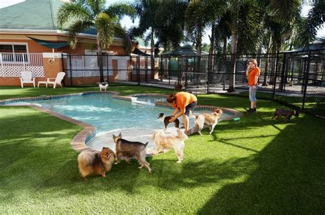 dog play area backyard pin by easyturf on easyturf loves pets pinterest