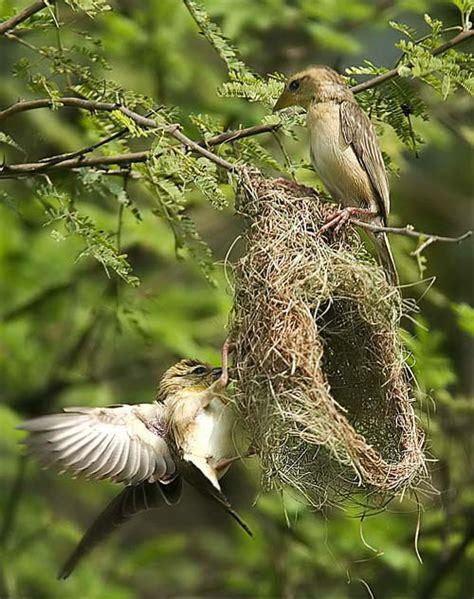 high tech bird nests taildom