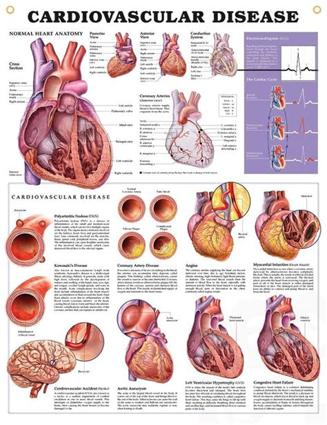anthocyanins in health and disease books the 25 best cardiovascular disease ideas on