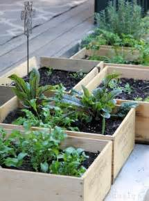 Small Veggie Garden Ideas Get Started Growing 5 Easy Small Vegetable Garden Ideas To Try Apartment Therapy