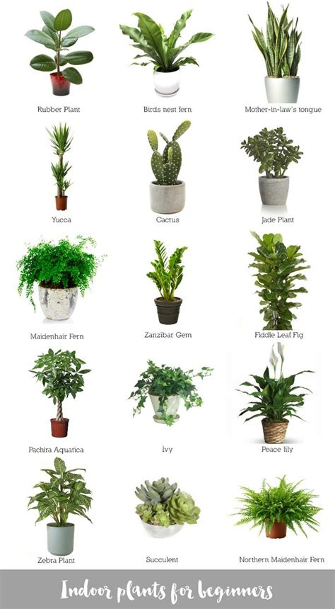 best indoor plants low light house plant identification by leaf home design ideas
